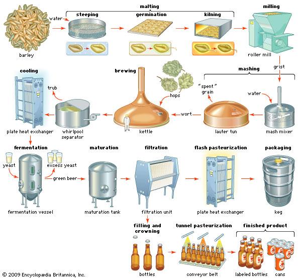 Beer & Wine Making - AB Agri-Business  |Beer Fermentation Process Diagram