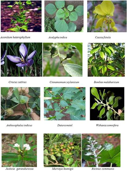 Images of medicinal plants. Pacific northwest medicinal plants the.
